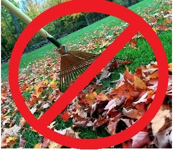 Toronto Chiropractic Tips – No Raking